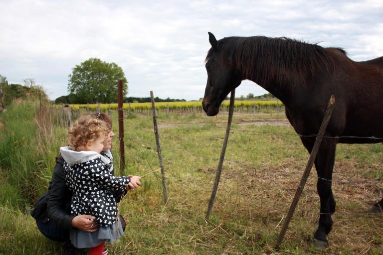cheval donner a manger