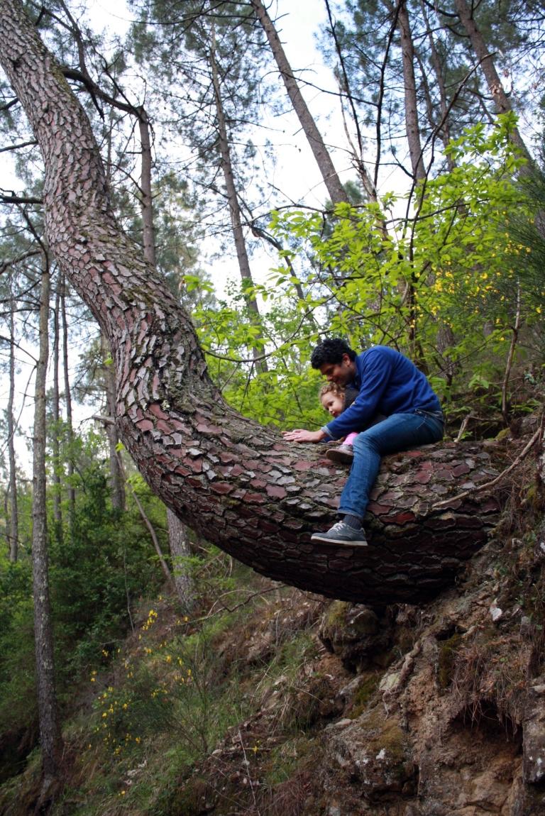 monter-dans-les-arbres
